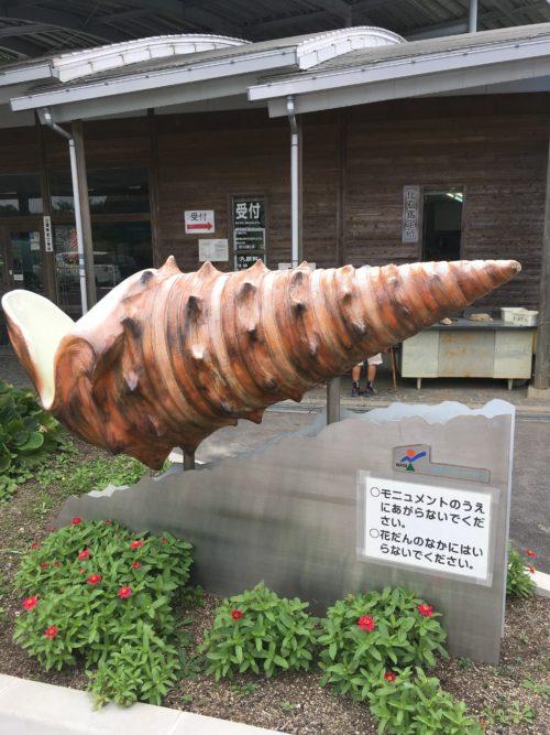 なぎビカリアミュージアムで化石発掘体験を再び!!