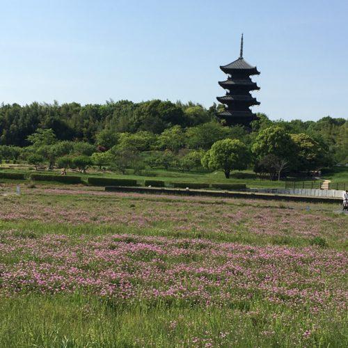レンゲ畑の向こうに五重塔